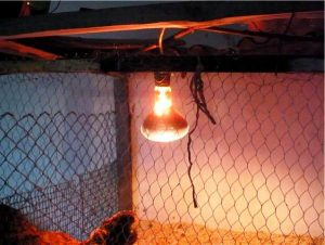 moshnost-lamp