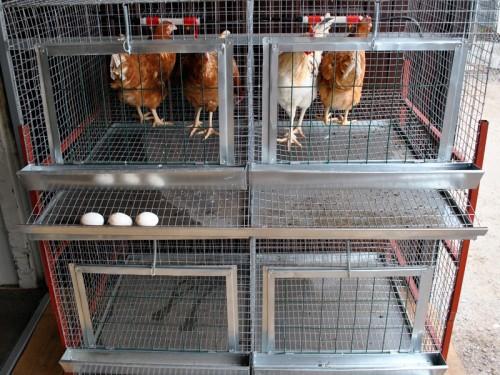 Клетки для кур в домашних условиях