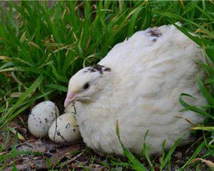 Какие паразиты могут содержаться в яйцах