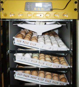 avtomaticheskij-inkubator