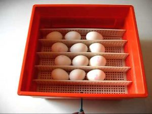 covatutto-54-inkubator