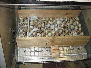 inkubator-iz-zheleznogo-baka