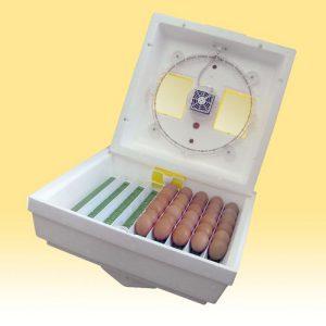 inkubator-kvochka
